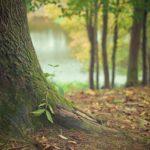 Przepiękny i {porządny zieleniec to nie lada wyzwanie, w szczególności jak jego pielęgnacją zajmujemy się sami.